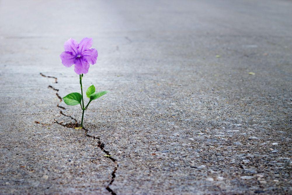 poverty mindset cracked flower