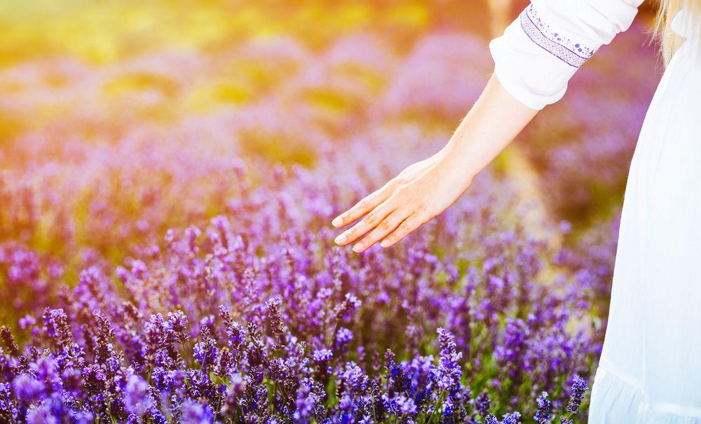 flower field abundance