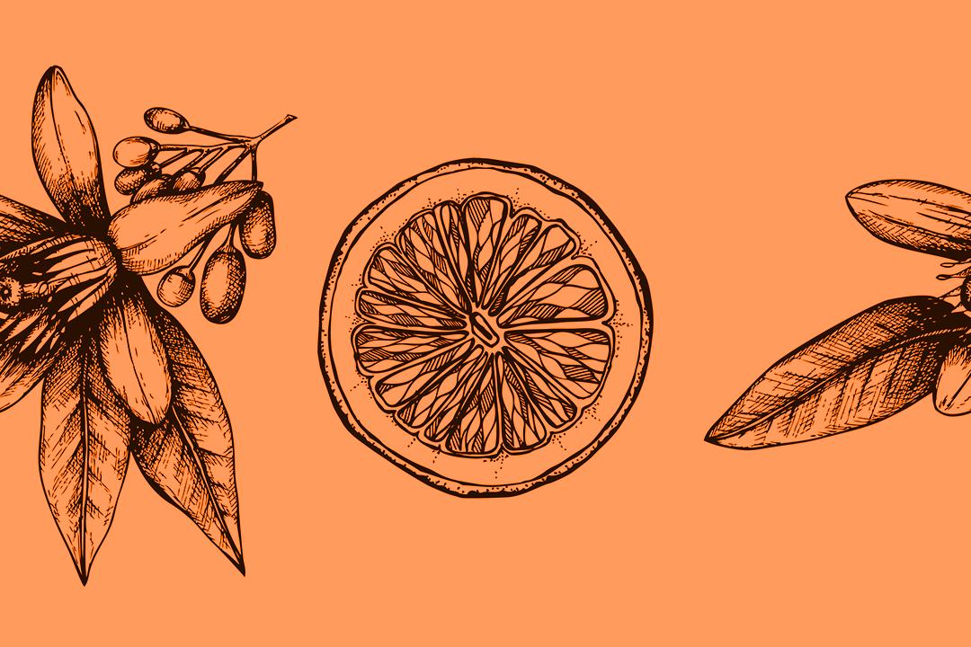 Wild Orange Meditation for Abundance