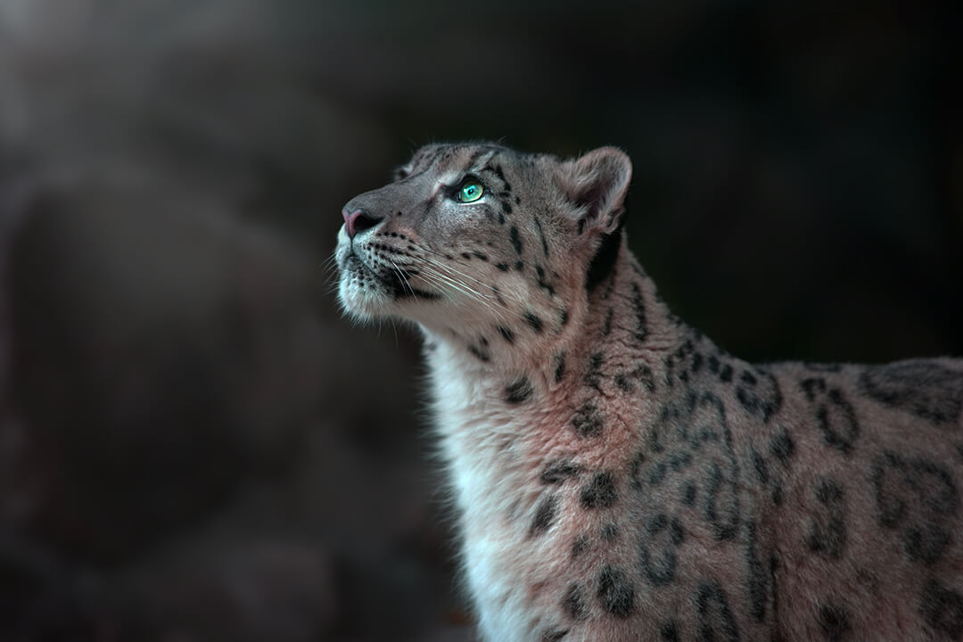 The 5 Reasons Why A Leopard CAN Change Its Spots